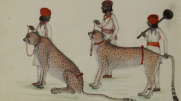 Cheetah painting British East Indian art