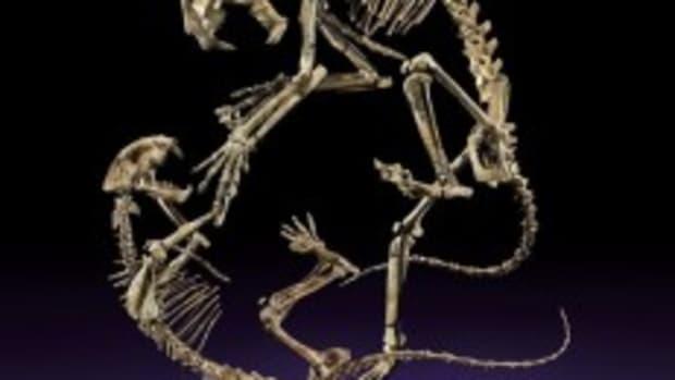 feline skeletons