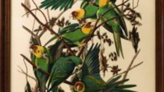 Carolina Parrot print