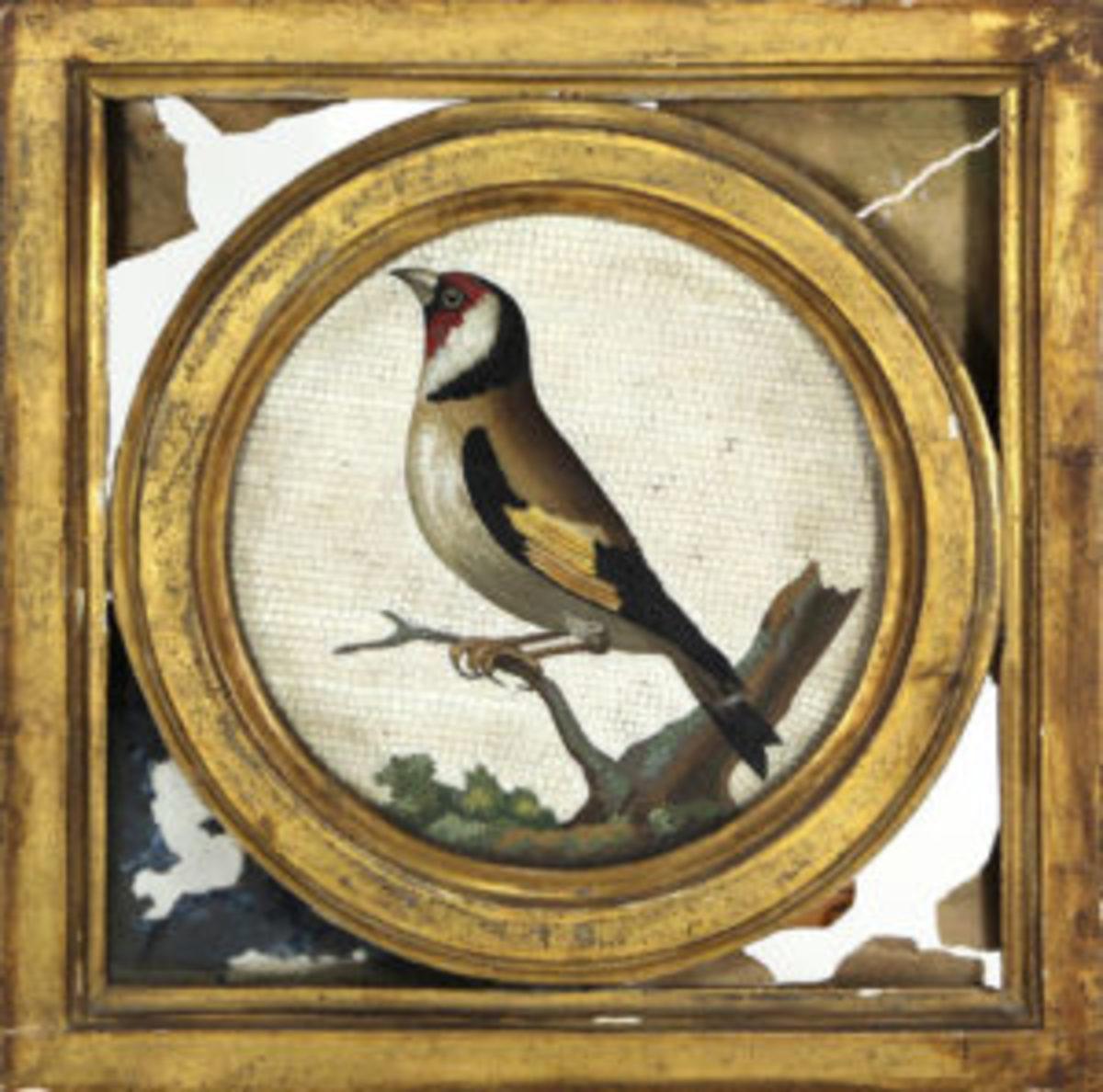 Raefellli plaque