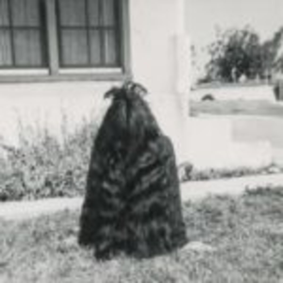 One of many oddities in the Peter J Cohen collection, here we see a thick mane of hair, only the edge of a foot revealing the figure that is masked.