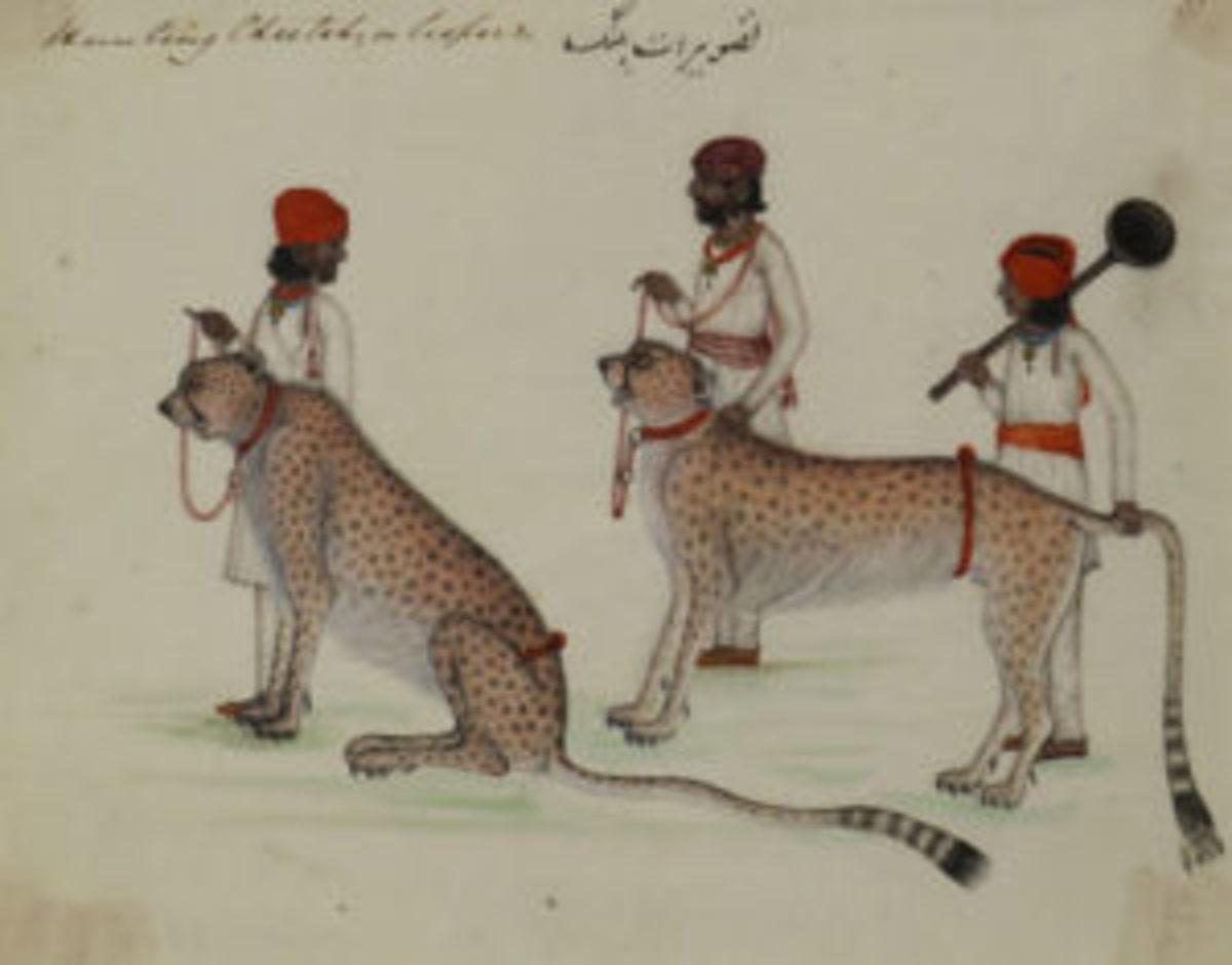 Cheetah painting British East Indian art