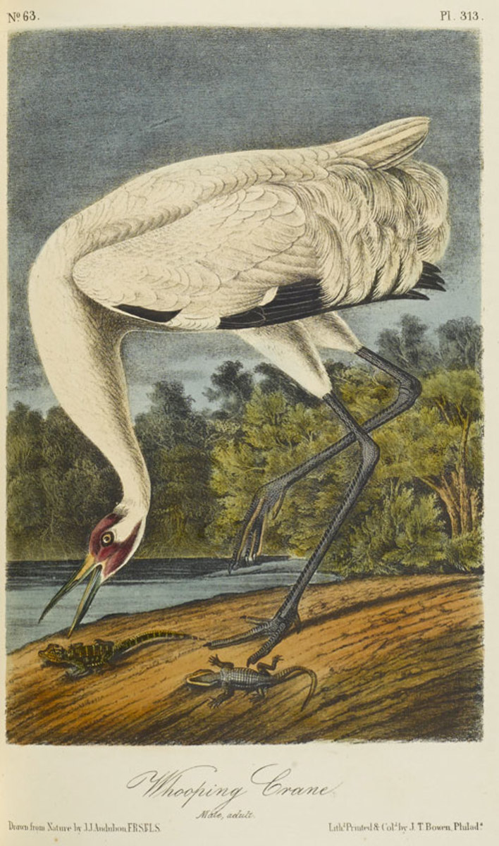 Bonhams_Audobon,-John-James-The-Birds-of-America
