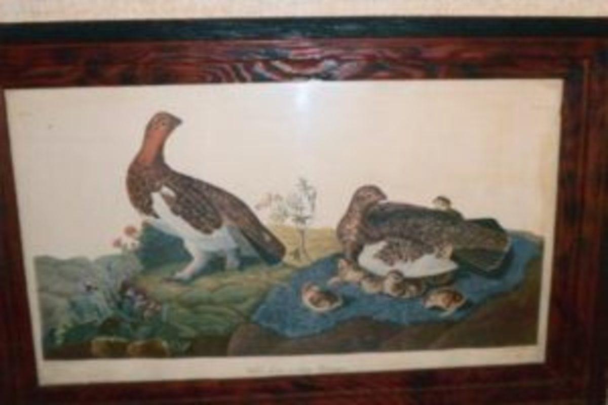 Genuine Audubon print? Probably not.