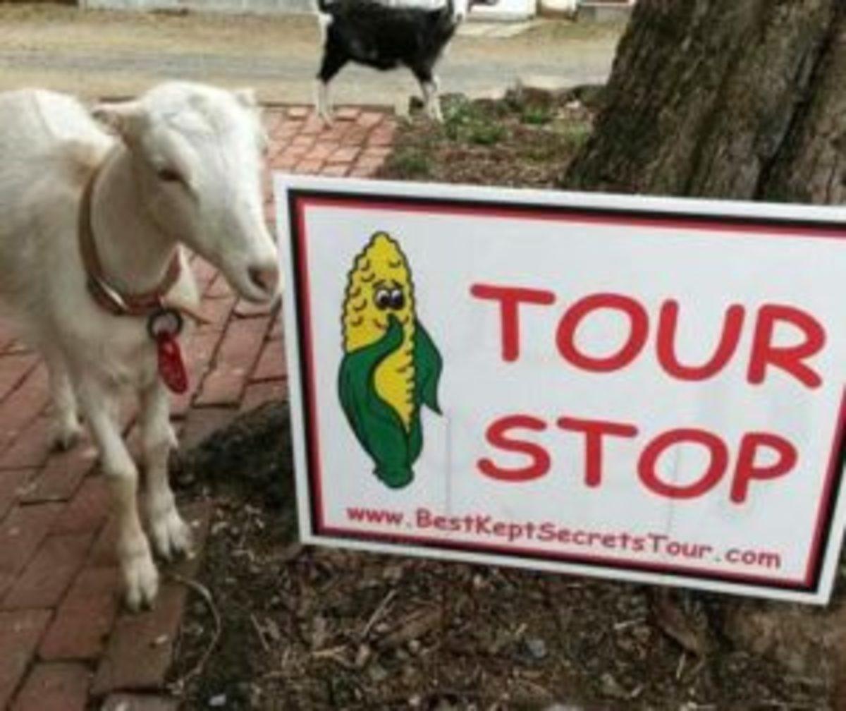 Best Kept Secrets Tour goat