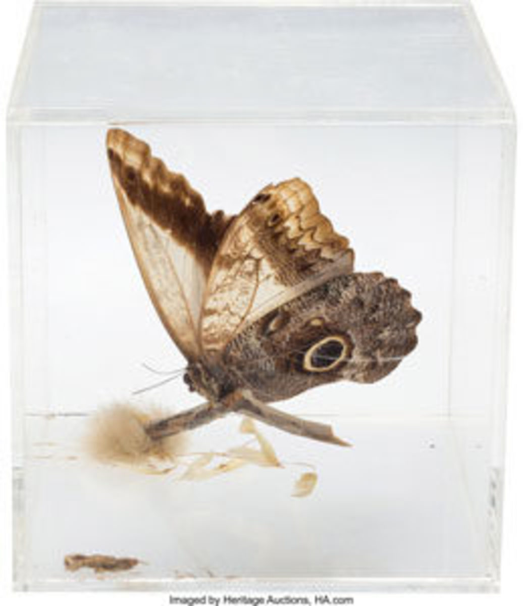 "This large preserved butterfly perched atop a twig in a 5"" x 5"" x 5"" clear acrylic case was previously owned by Elvis and displayed in Graceland's Pool Room. From the accompanying notarized letter of provenance from Memphis Mafia member Richard Davis: ""I was in Elvis' Pool Room at Graceland one day with several of the Memphis Mafia as I was delivering some records Elvis wanted. Everyone was playing pool with Elvis. I had drunk a few cocktails and kept picking up one of the butterfly cubes with a large brown butterfly inside. Elvis said, 'Man, you sure are staring at that thing, you better take it home,' which I did. It has been with me ever since."" This sold at auction for $1,000. Image courtesy of Heritage Auctions"