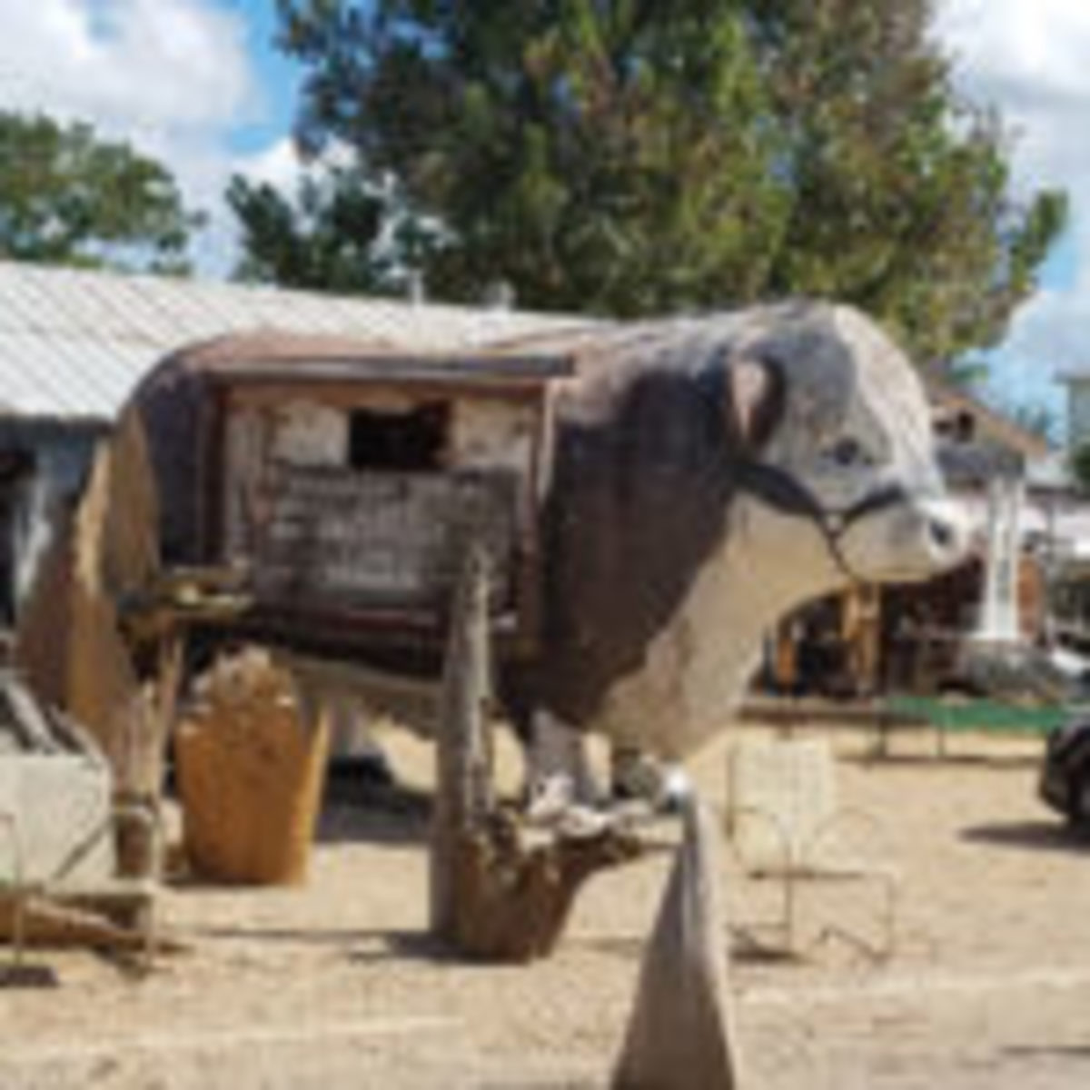 This life-size pâpiér mâché steer shows how eclectic the offerings of the Round Top antiques fairs truly are.