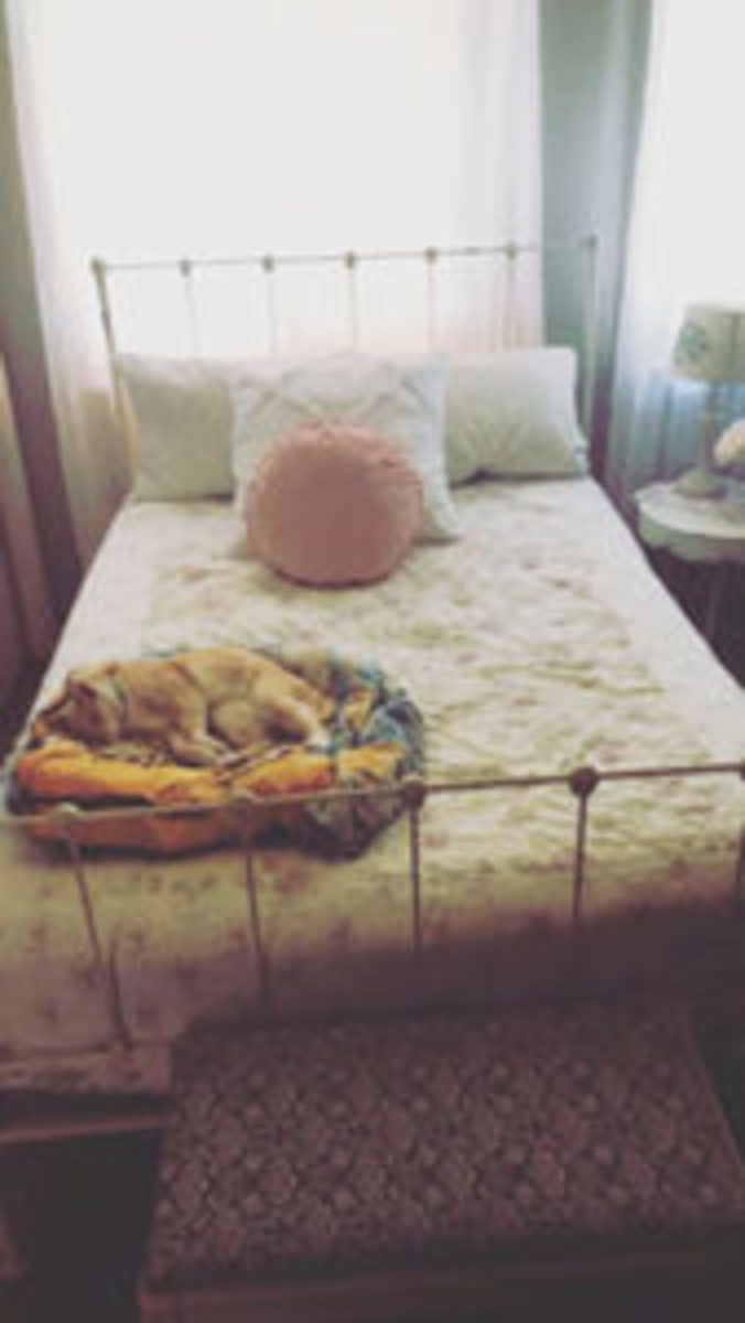 The bed and kitty of Lora Lee Perez.