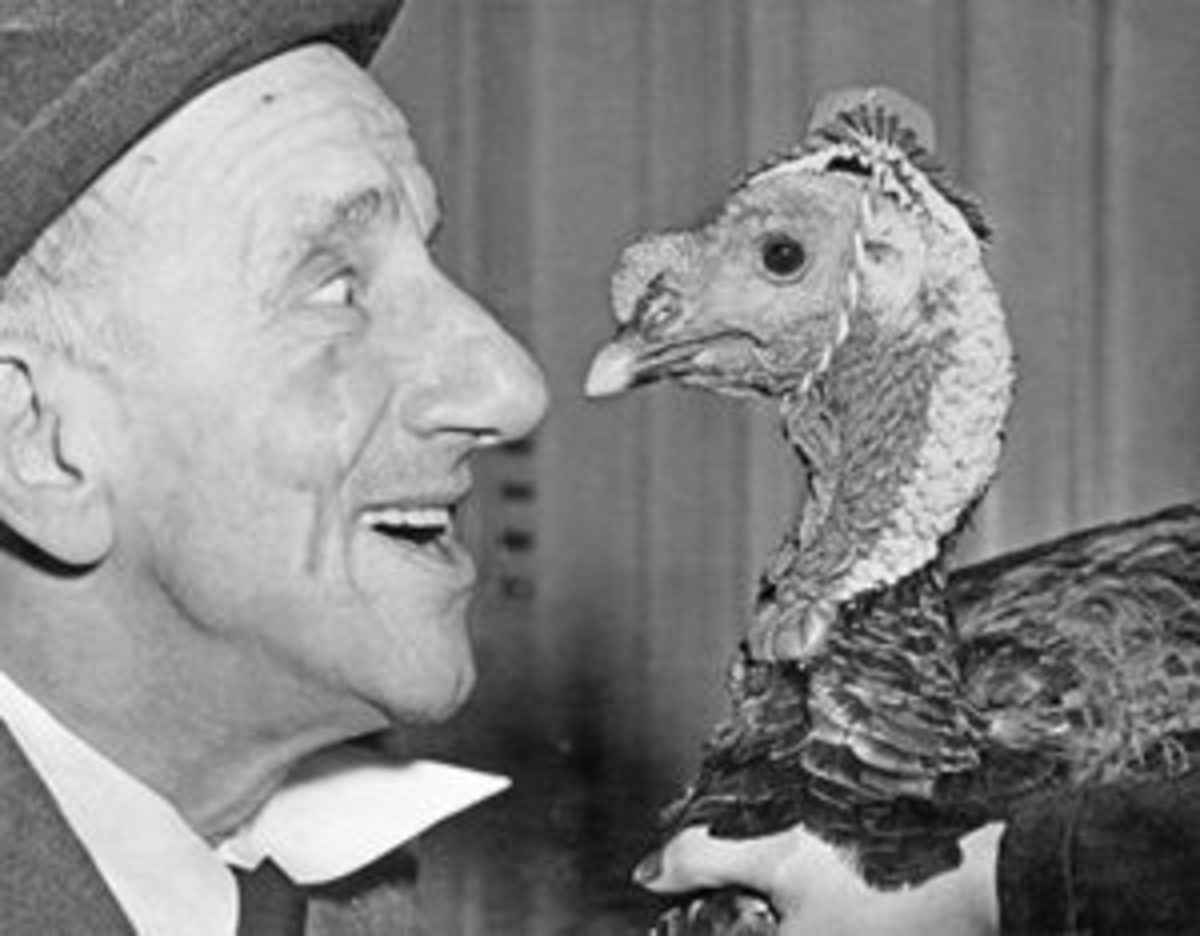 "Looking a gift turkey in the eye, Jimmy Durante ""noses"" up to the gobbler presented to him in preparation for his role as Grand Marshal of the annual Macy Thanksgiving Day Parade in 1950. Jimmy took good care of the bird to make certain it could make the long march down Broadway with an impressive array of floats and floating giants. Photo: Bettmann/Contributor/Getty"