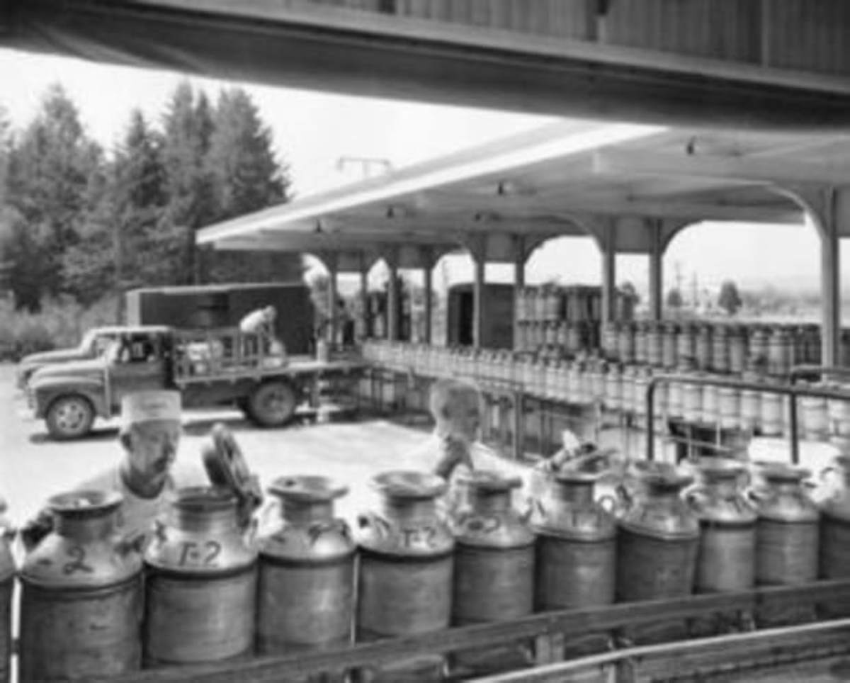 "Ten-gallon milk cans arriving at a dairy processing plant. The man on the left is known as a ""sniffer."""