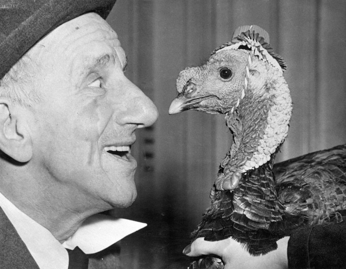 """Looking a gift turkey in the eye, Jimmy Durante """"noses"""" up to the gobbler presented to him in preparation for his role as Grand Marshal of the annual Macy Thanksgiving Day Parade in 1950. Jimmy took good care of the bird to make certain it could make the long march down Broadway with an impressive array of floats and floating giants."""