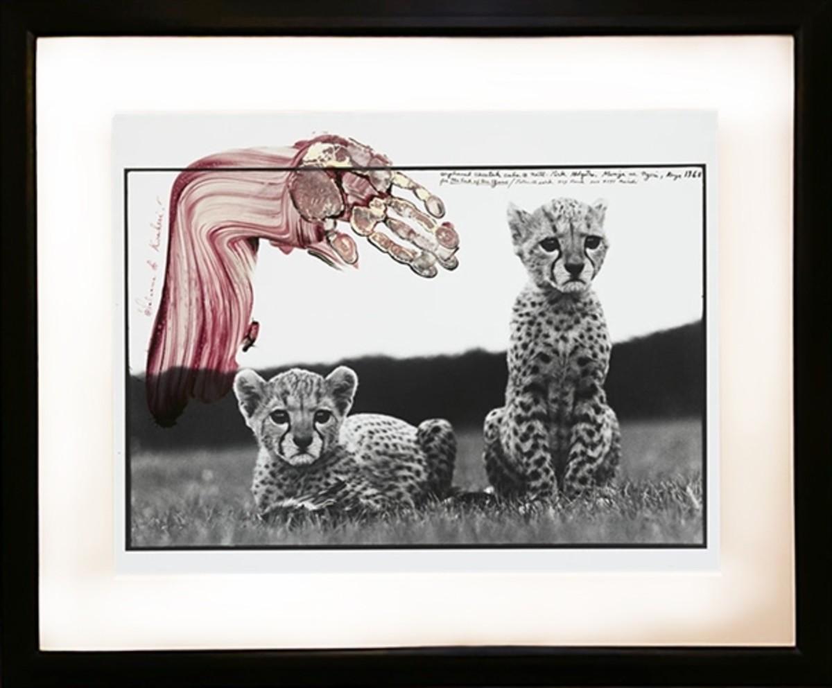 Orphaned Cheetahs Cubs, Mweiga, near Nyeri, Kenya, 1968