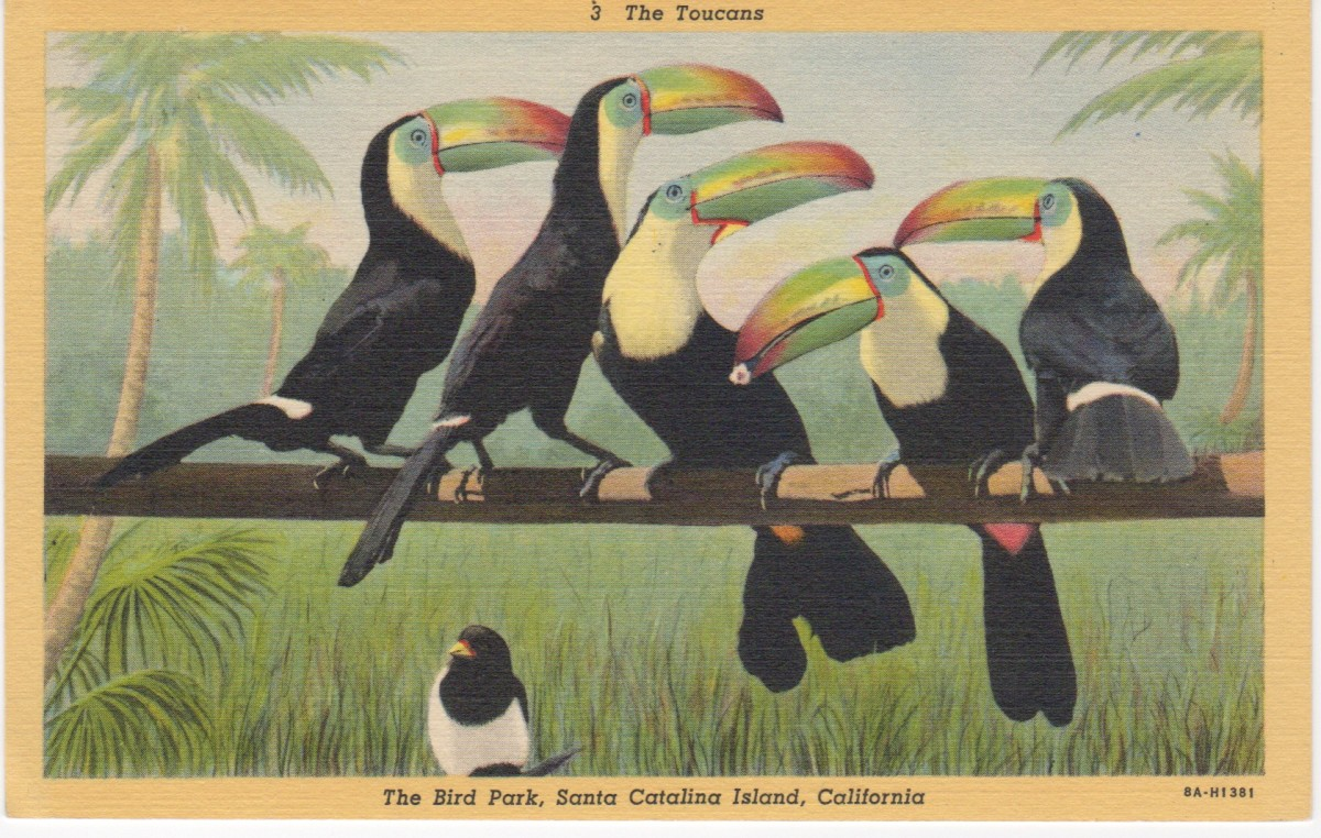 The Toucans at The Bird Park, Santa Catalina Island, California.