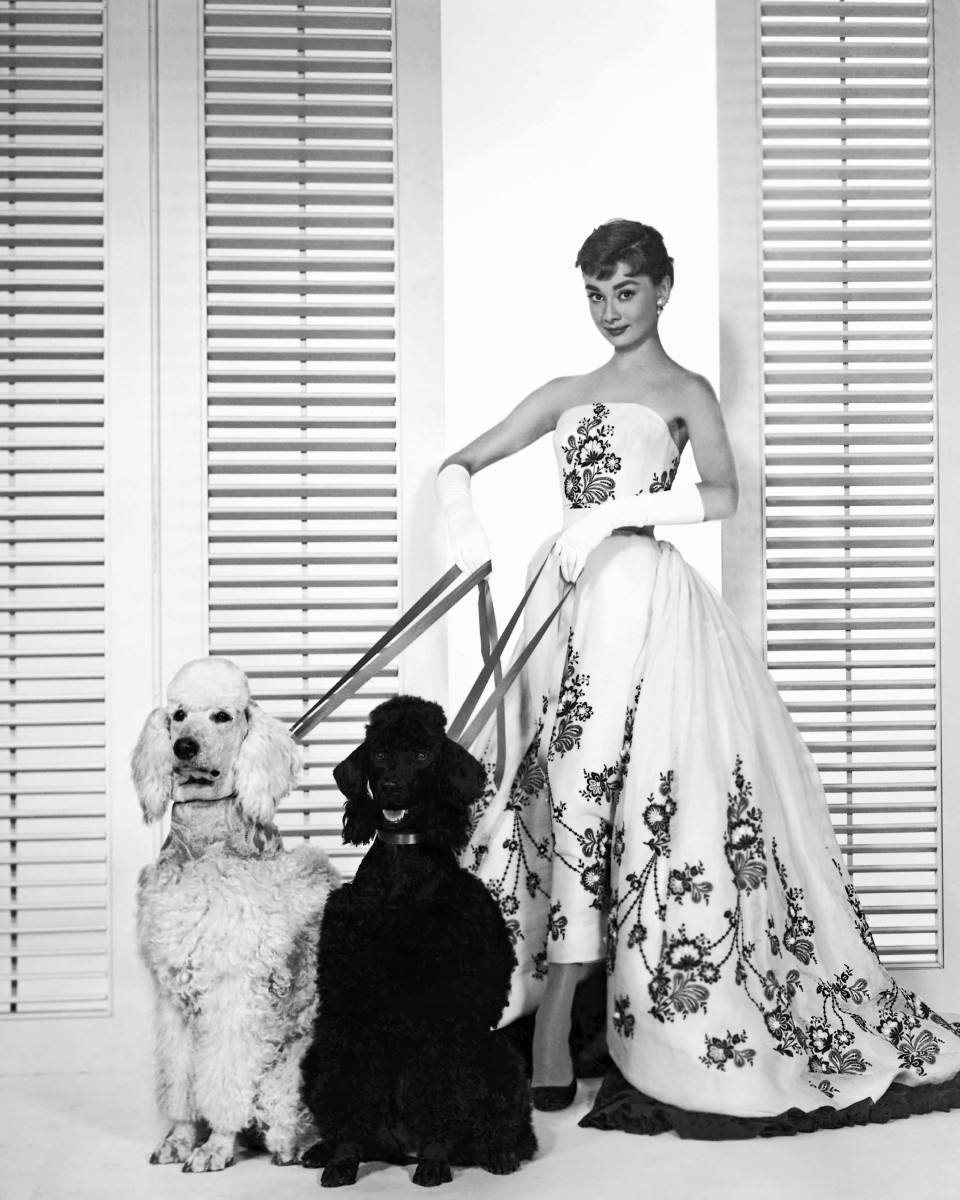 The always stylish Audrey Hepburn with poodles in 1954.