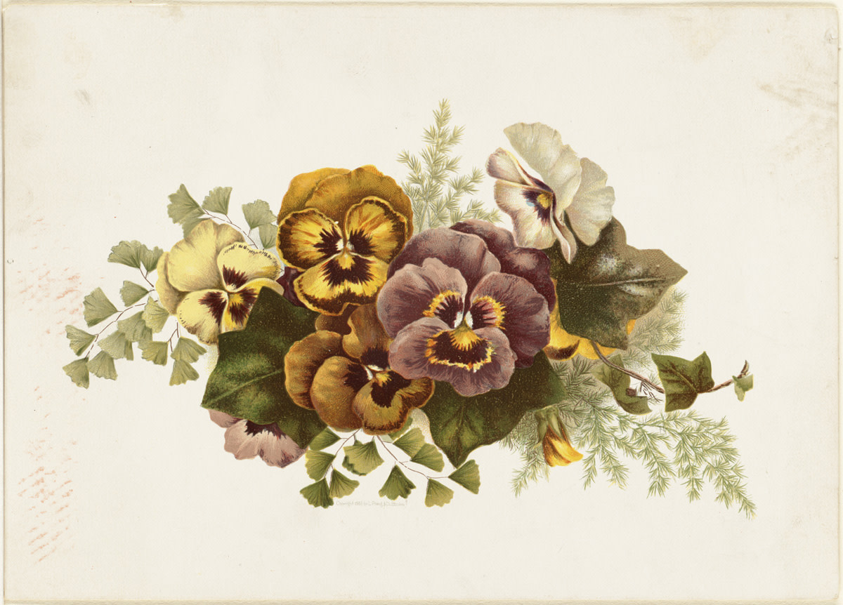 A print from 1861-1897 of a bouquet of mixed-colored pansies:  yellow (happiness), orange (welcoming), violet (passion) and white  (taking a chance).