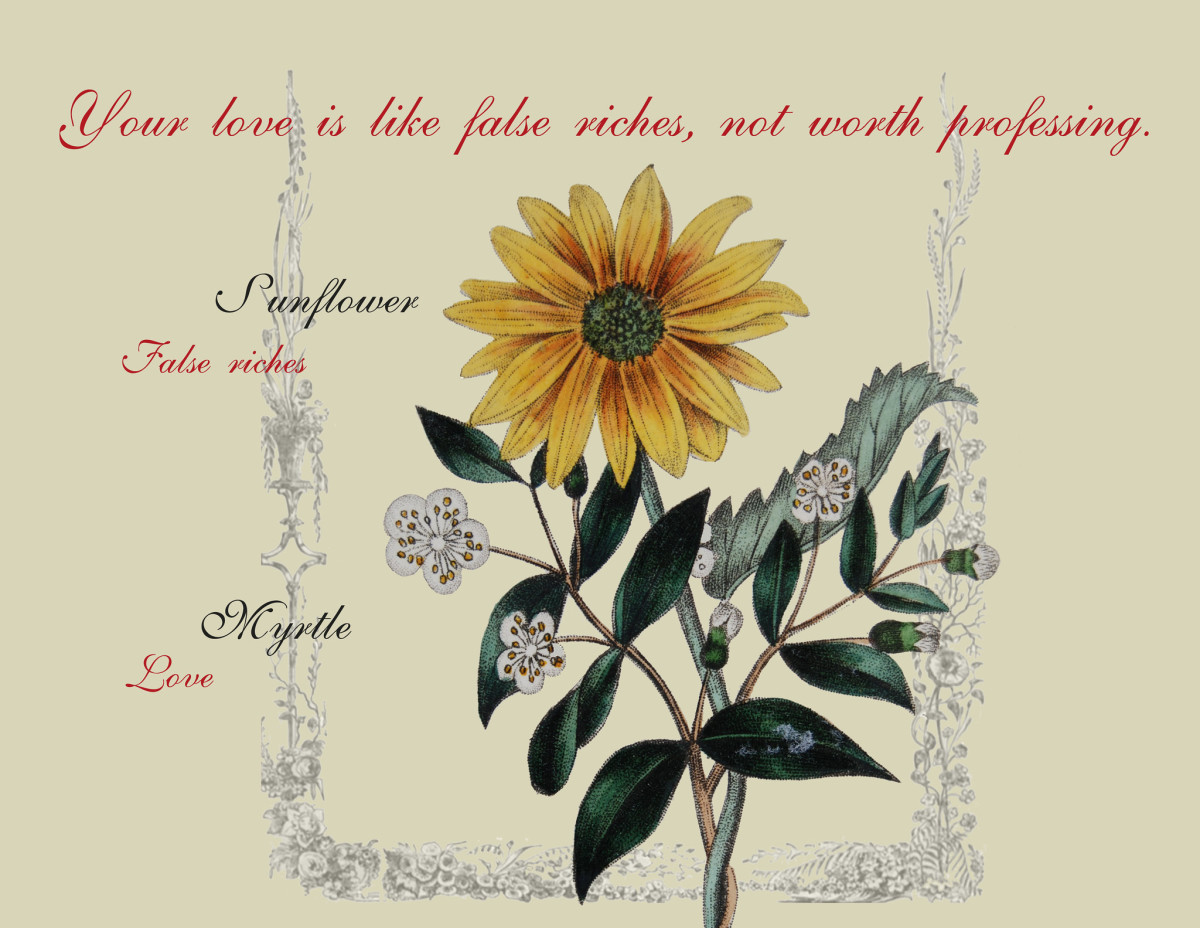This sunflower and myrtle bouquet means someone's love  is like false riches. From The Language of Flowers, 1834.