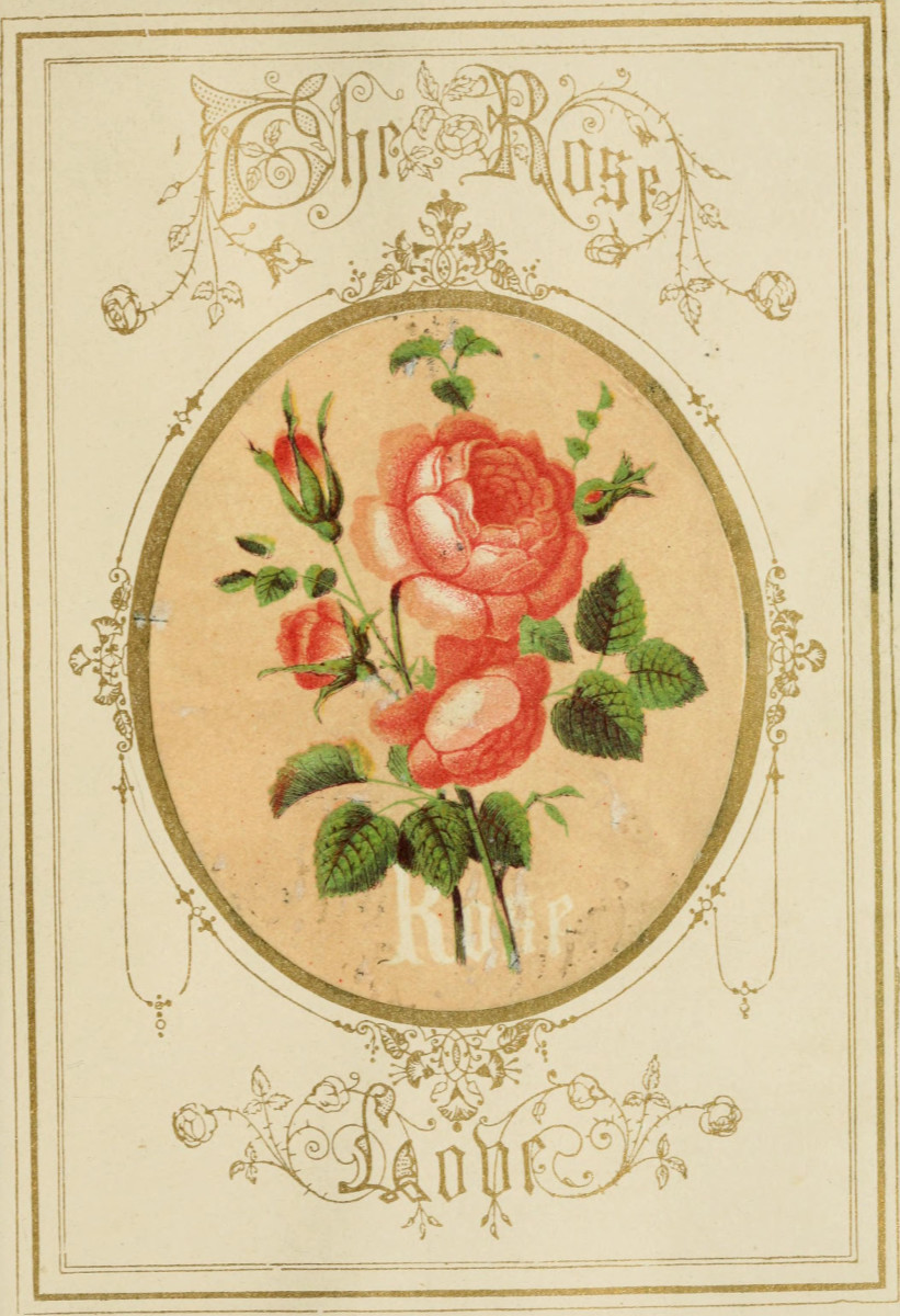 A page featuring the red rose from The Language of Flowers:  An Alphabet of Floral Emblems, 1857.